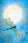 Dragonfly Moon